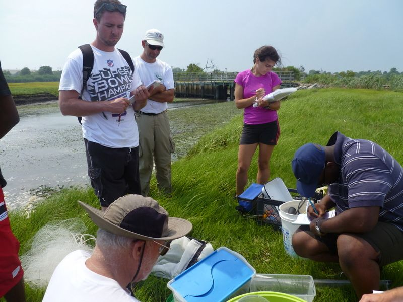 Adelphi environmental studies students working in the field