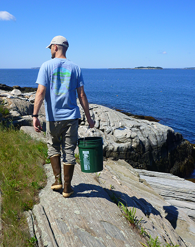 Adelphi student in the field on the Maine coast